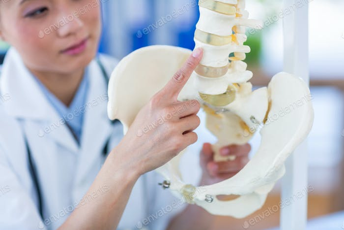 Doctor showing anatomical spine in medical office