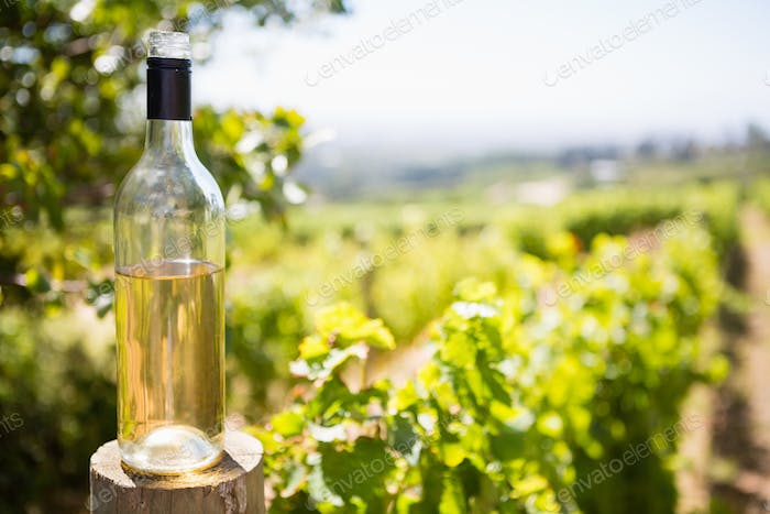 Wine bottle in vineyard