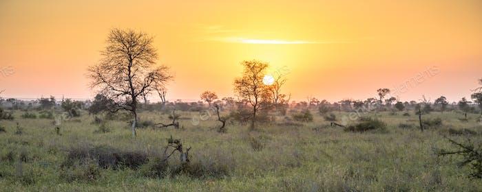 Sonnenaufgang über Savanne