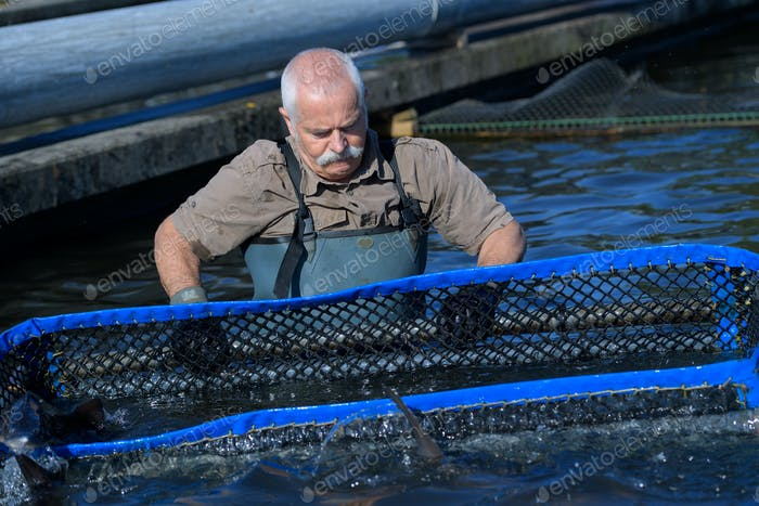 fish-farmer working with a net