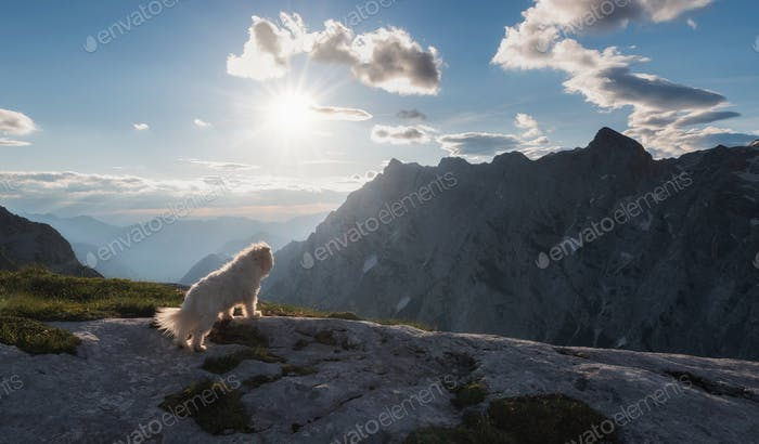 Dog watching the sunrise in the mountains of Julian Alps