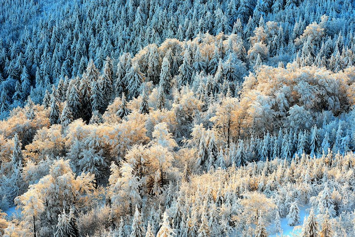 Detail view at colorful trees from Jested mountain peak. Cold winter morning forest, Czech republic.