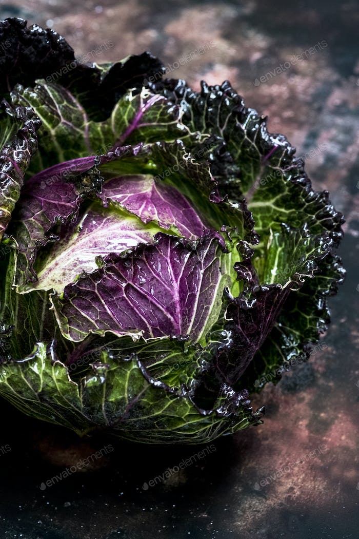 Still life, a fresh round green savoy cabbage with purple red leaves.