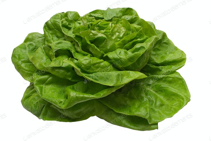 Butter Lettuce with Clipping Path Isolated on a White Background