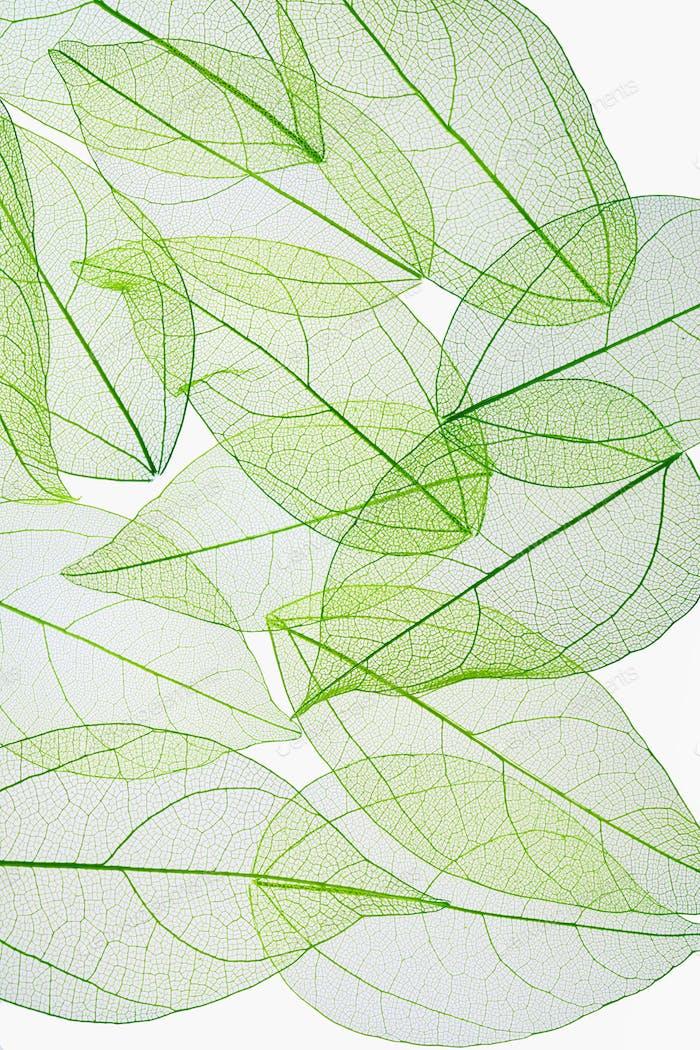 leaf vein texture background