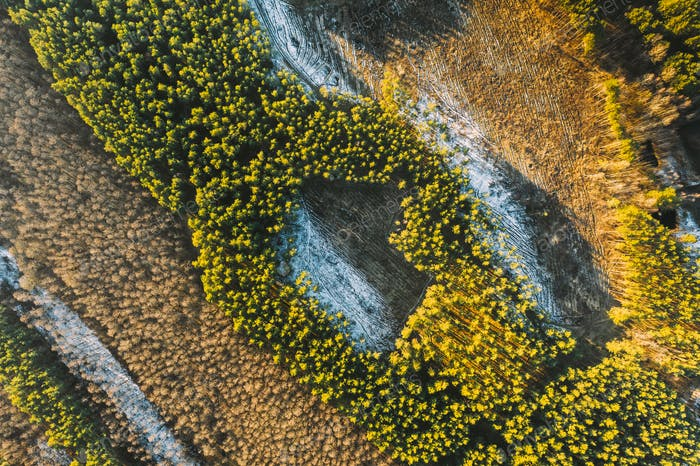 Aerial View Of Deciduous Trees Without Foliage Leaves And Green Forest In Landscape At Early Spring