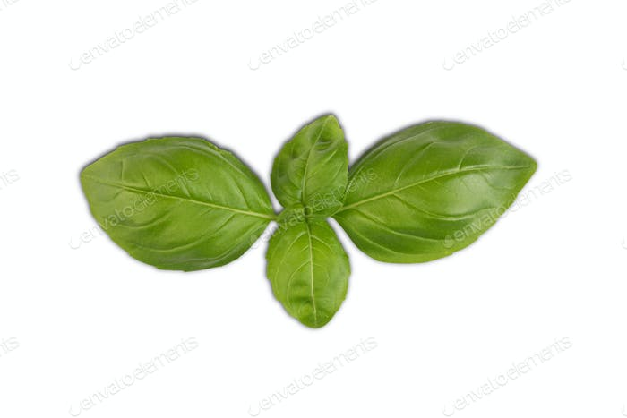 Fresh basil leaves isolated on white background, top view, flat lay