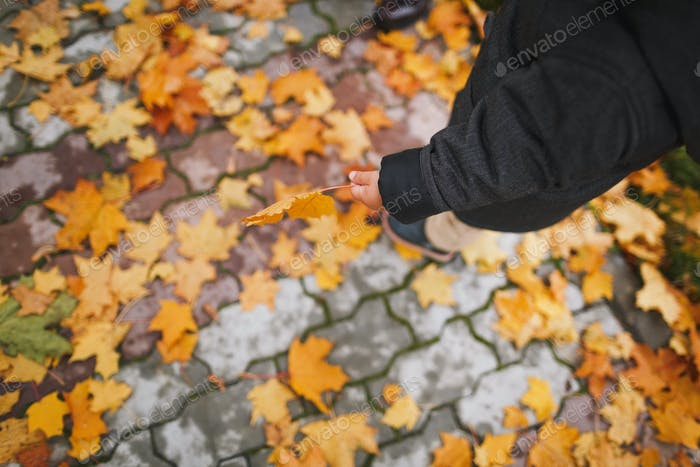A child on a walk in the autumn park.