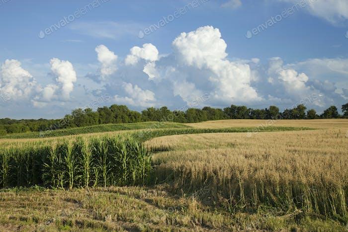 Corn and Wheat Fields Below Dramatic Clouds