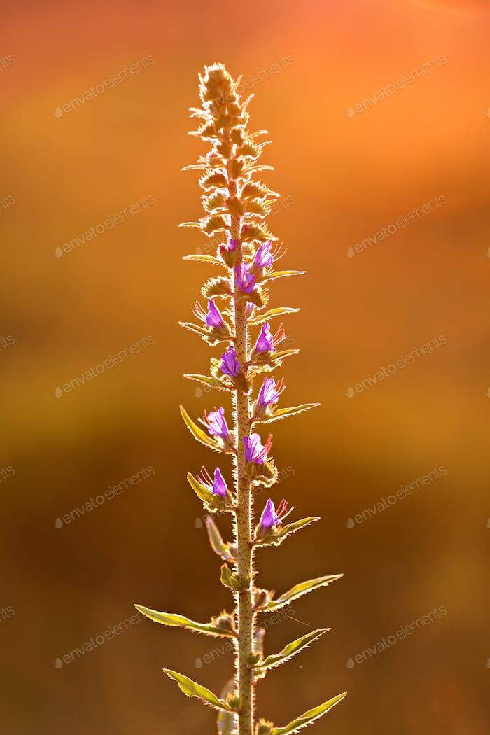 Blumen im Sonnenuntergangslicht