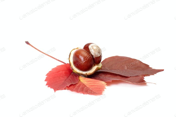 Splendid view of chestnuts and leaves.