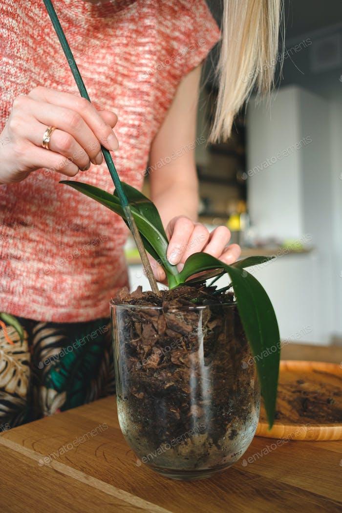 Frau Hände Pflanzen eine Blume im Haus