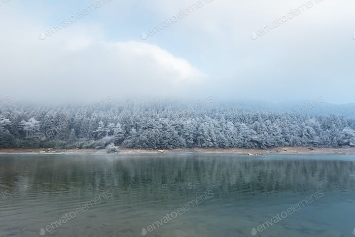 winter lake and forest