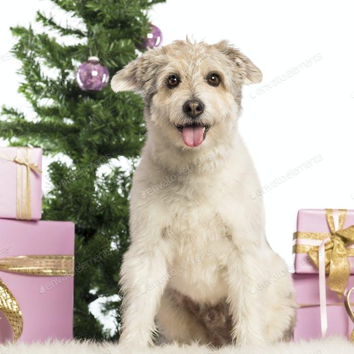 Crossbreed sitzt vor Weihnachtsschmuck vor weißem Hintergrund