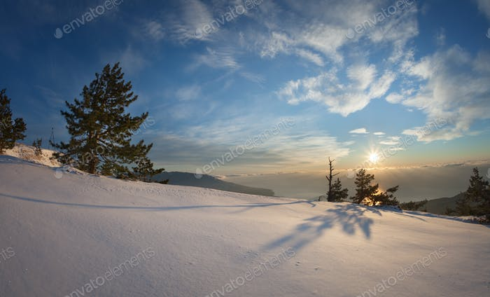 Trees in the snow against the blue sky with clouds and sun