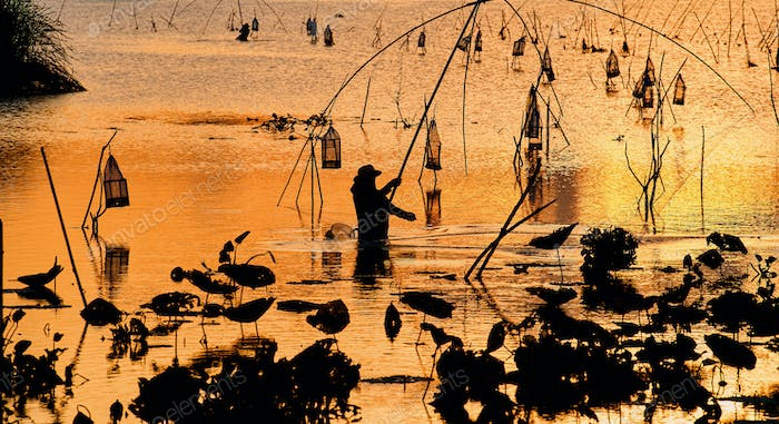 Silhouetted of aquatic plants and the fishing in the lake