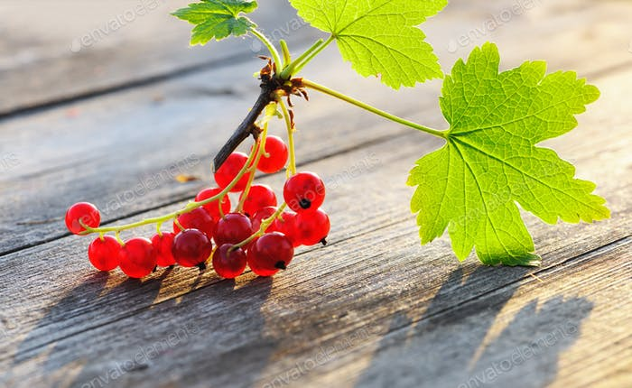 Redcurrant on wooden table