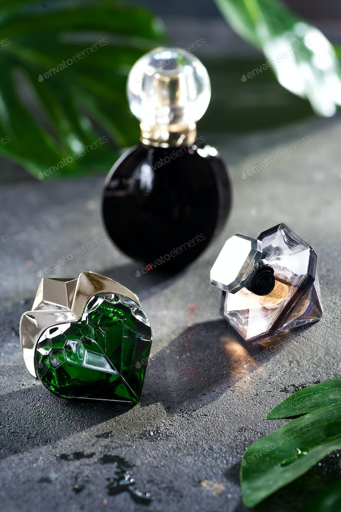 Women's perfume in beautiful bottle with green leaves on a black concrete background with bright