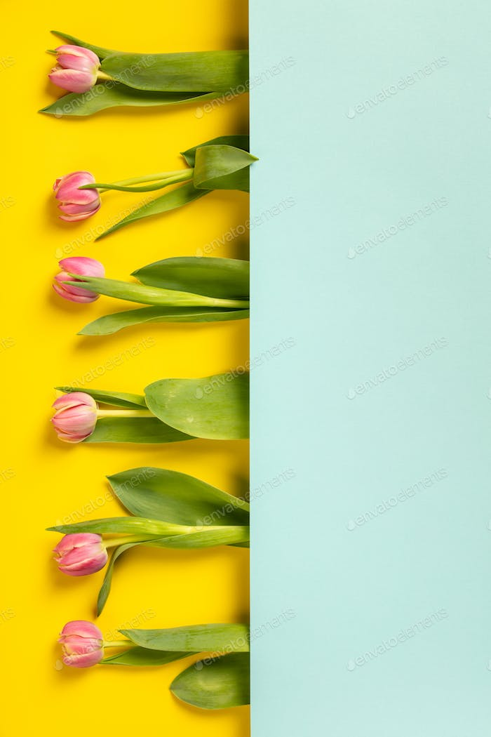 Pink tulips on yellow background, flat lay