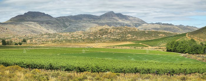 Vineyards in Cederberg nature reserve