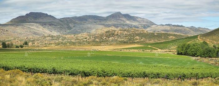 Vineyards in Cederberg nature reserve