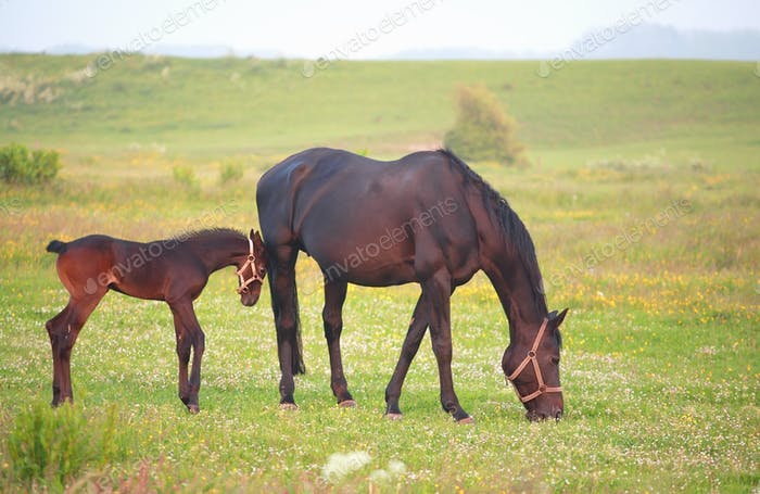 mother horse with foal on pasture