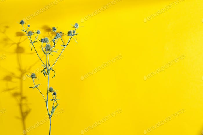 Plant backdrop with dry thistle twig on a yellow background