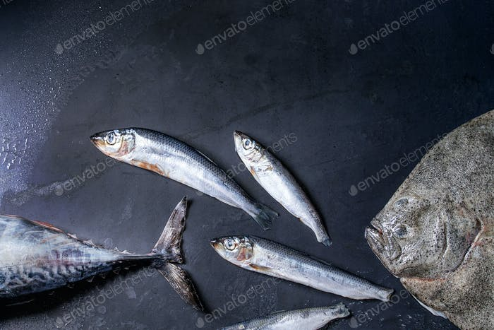 Raw fresh tuna, herring and flounder fish
