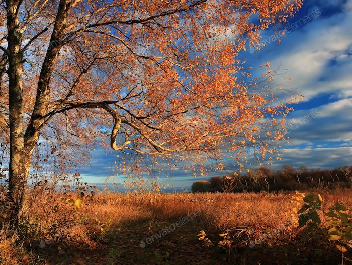 Autumn forest on the sunset