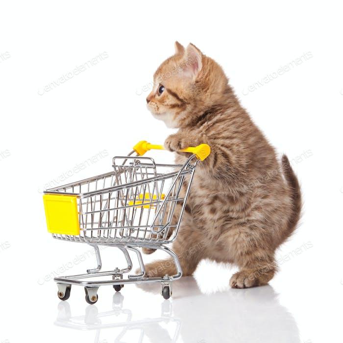 britische Katze mit Einkaufswagen isoliert auf weiß. Kätzchen osolated