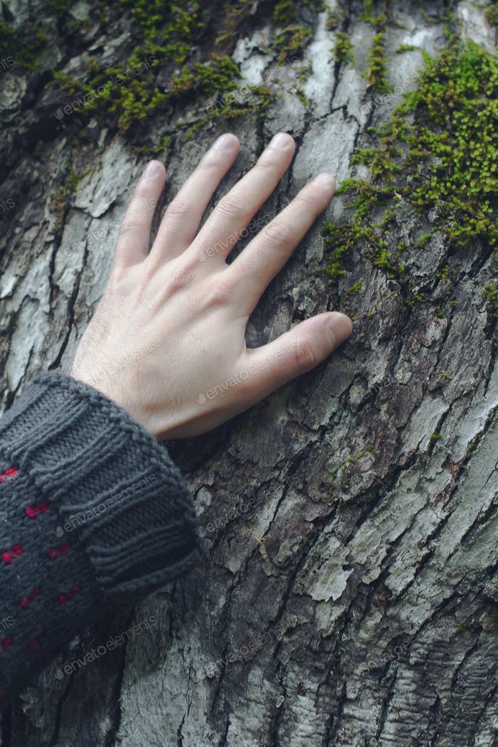 closeup of hand touching a tree
