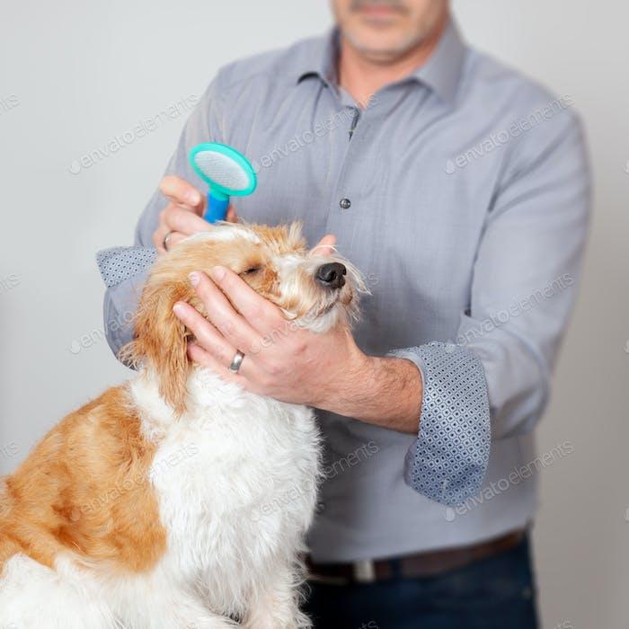 Süße Hundepflege