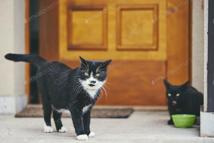 Cats in front of door of house