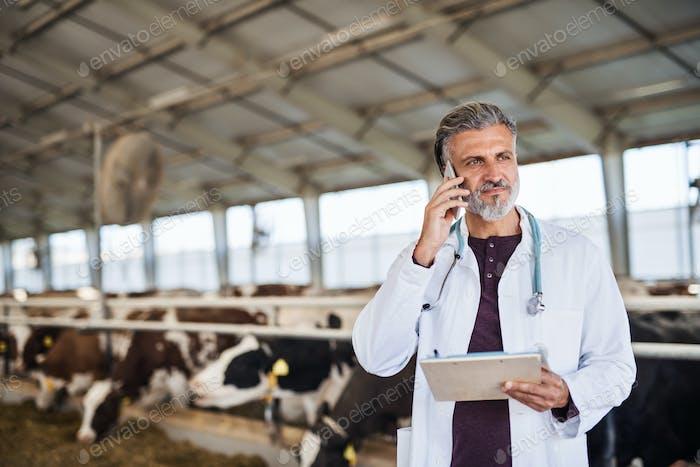 Mann Veterinärarzt arbeitet auf Tagebuch Bauernhof, Landwirtschaft Industrie