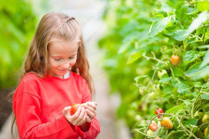 Entzückendes kleines Mädchen erntet Gurken und Tomaten im Gewächshaus. Saison des Reifens von Gemüse in