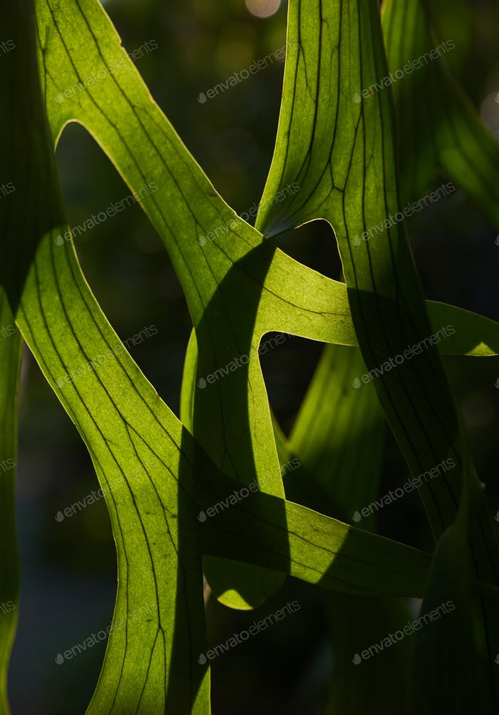 Green leaves with light and shadow