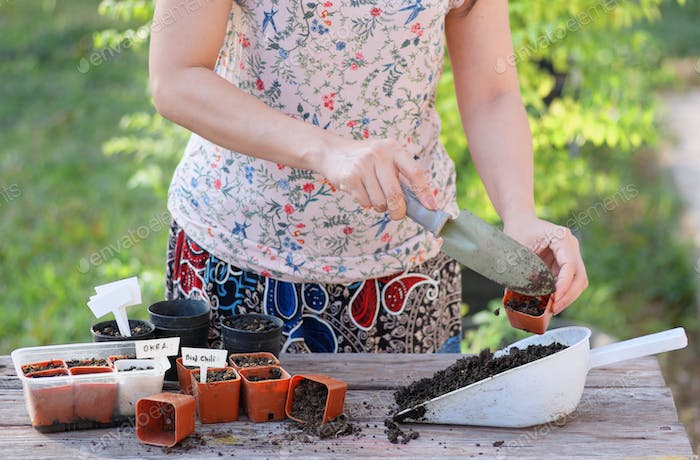 Women prepare to grow seedlings with small pots