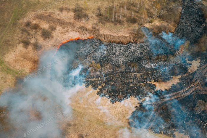 Aerial View. Dry Grass Burns During Drought And Hot Weather. Bush Fire And Smoke In Meadow Field