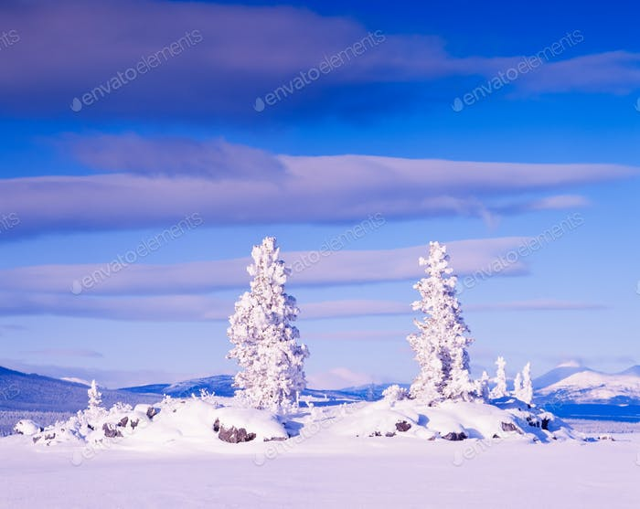 Snowy Honey Moon Island Tagish Lake Yukon T Canada