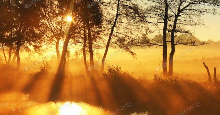 Panorama rays of the rising sun