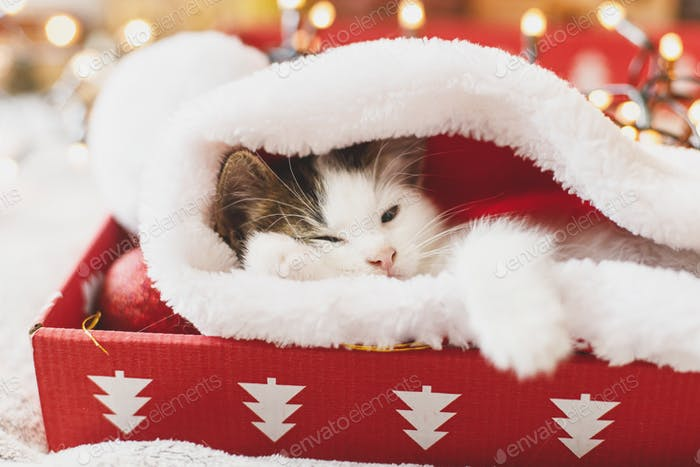 Adorable kitten sleeping in cozy santa hat in red box on background of ornaments and lights