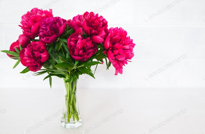Red peonies in vase on white background