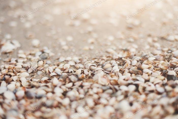 Sea beach sand and seashells background, natural seashore