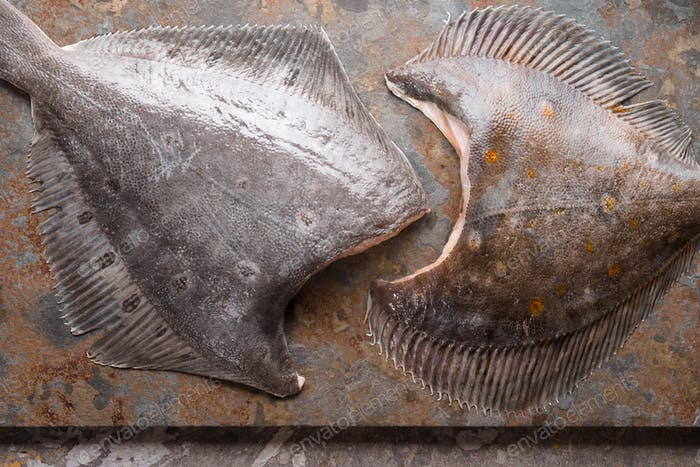 Raw flounders on the stone background top view