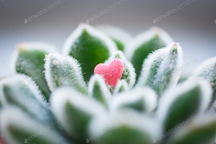 Small pink candy Heart lying on shaggy green leafs