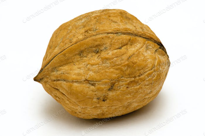 Single Walnut Isolated on a White Background