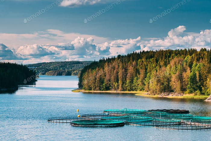 Fisheries, Fish Farm In Summer Lake Or River In Beautiful Summer