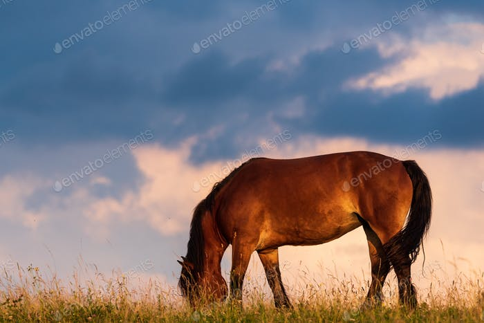 Portrait of a horse standing with his back to the sun at sunset on the field and sky background