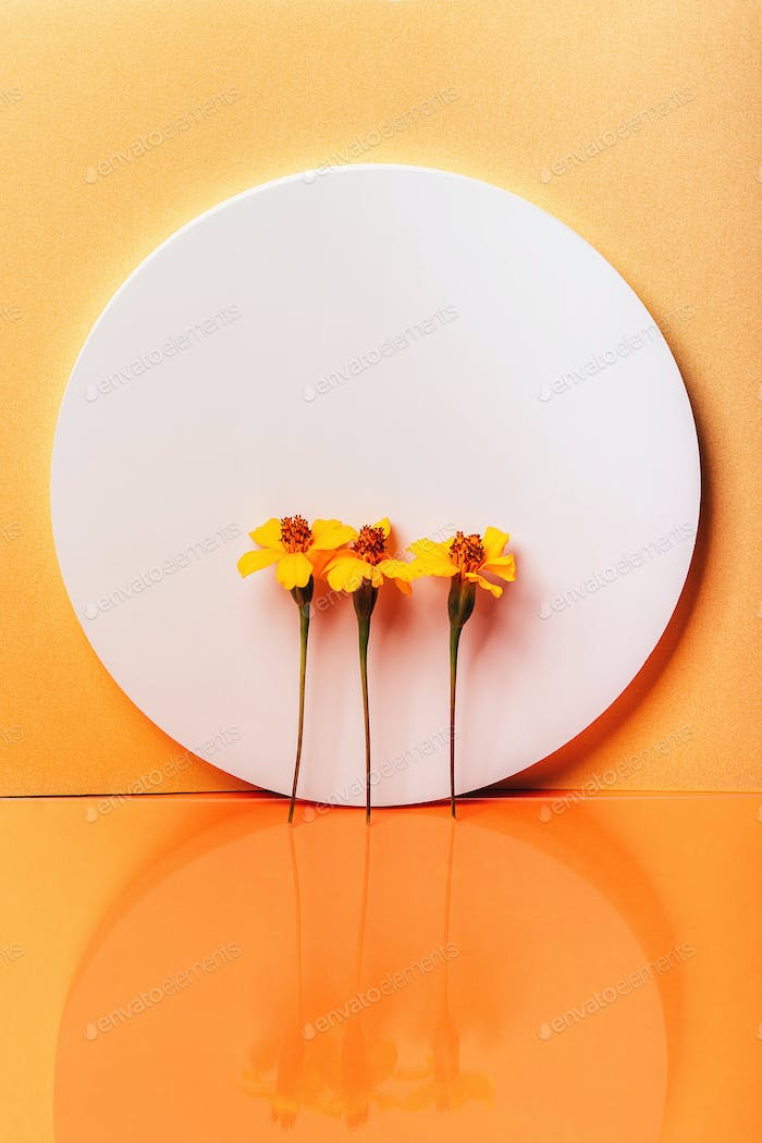 Sphere shape stand with Chernobrivtsi flowers on orange background with reflection.