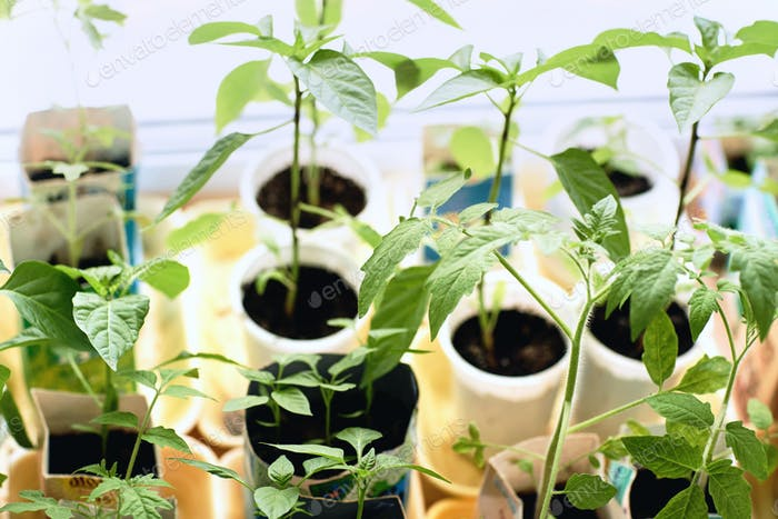 Potted plants in pots